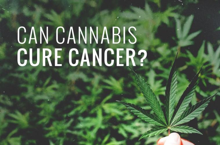 can-cannabis-cure-cancer