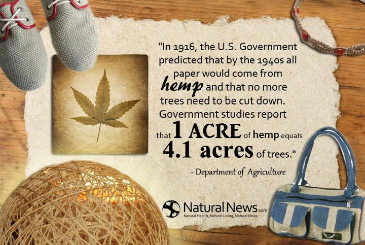 hemp-trees-comparison-paper
