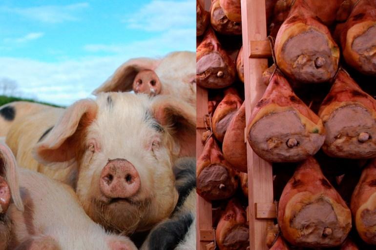 face_reality_factory_farming_vegan_cowspiracy