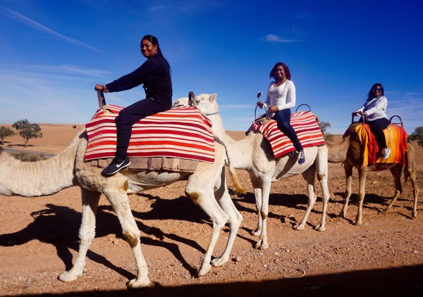 Must Do Activities in Marrakech
