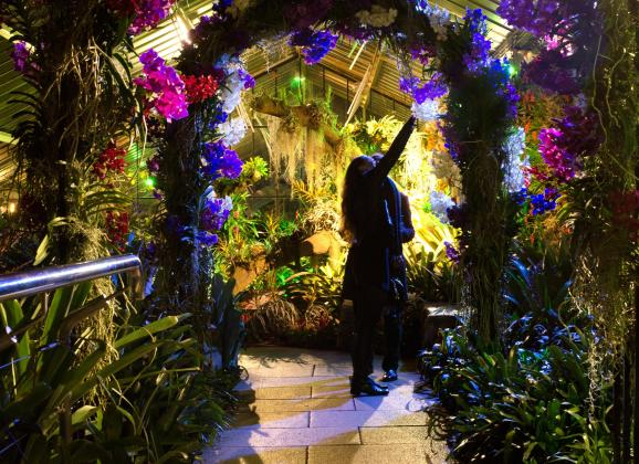 Kew After Hours: Orchids Festival