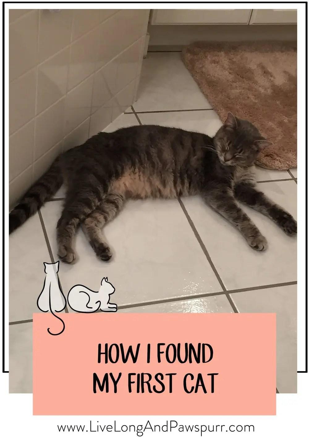 How I got my first cat!