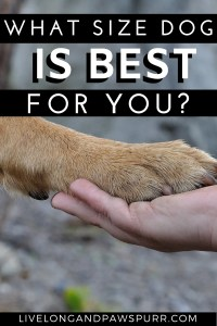 what size dog is best for your family