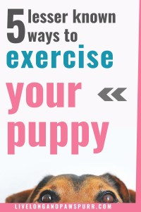 how to exercise your dog