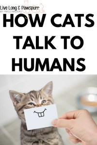 how cats talk to humans #cats #cattalk #cattail #catcommunication