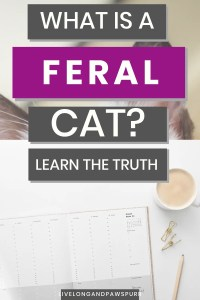 what is a feral cat #catfacts #cathacks
