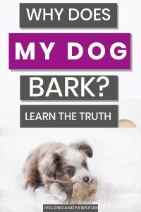 why does my dog bark #dogbark #dogquestions