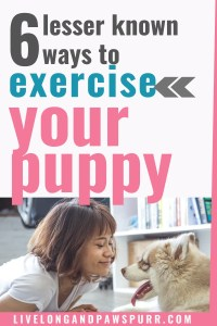 how to exercise your dog #dogtips #dogs101 #allaboutdogs