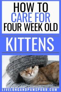 all about four week old kittens #fourweekoldkittens #kittencare