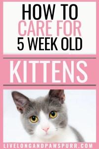 all about 5 week old kittens #kittencare #kittens #newkitten