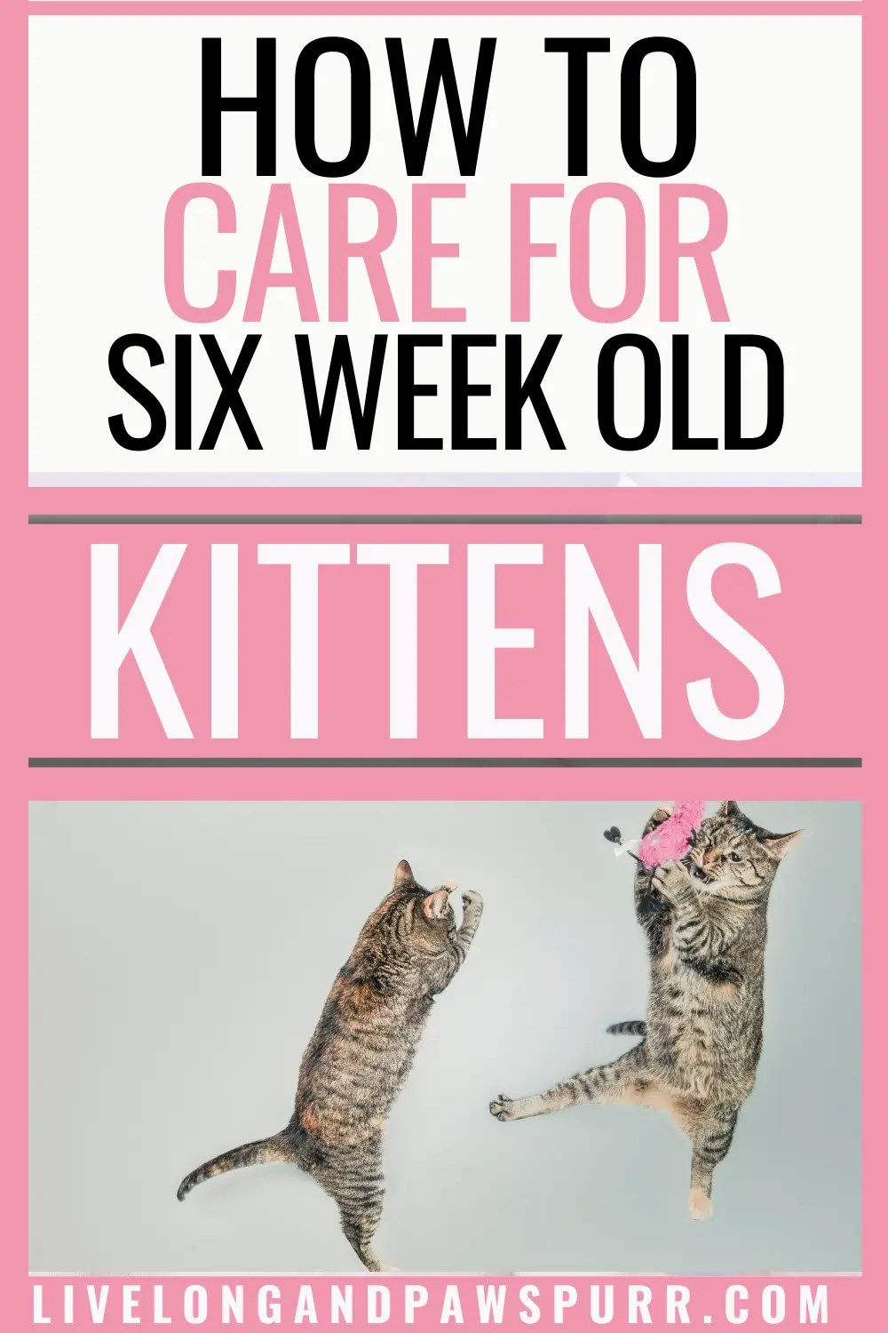 The Complete Guide To 6 Week Old Kittens Live Long And Pawspurr