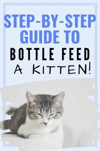 guide to bottle feeding kittens #bottlefeeding