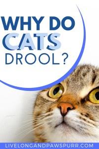 Why Do Cats Drool? #understandingcats #catdrool