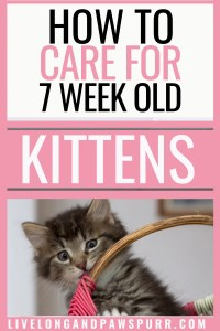 how to care for seven week old kittens #kittencare #sevenweeksold