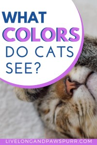 What Colors Do Cats See? #catcolors #cateyes #cats #catfacts
