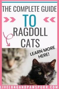 The Complete Guide To Ragdoll Cats #ragdollcats #ragdoll #catbreed #ragdollcats