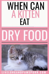 When Can A Kitten Eat Dry Food #catquestion #kittenquestions #kittencat #drycatfood #catfood