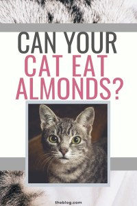 Can Your Cat Eat Almonds? #cats #catfood