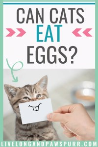 Can Cats Eat Eggs? #cancatseat #catquestions #cathealth