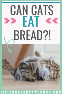 is bread toxic for cats?