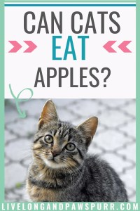 Are apples safe for cats?