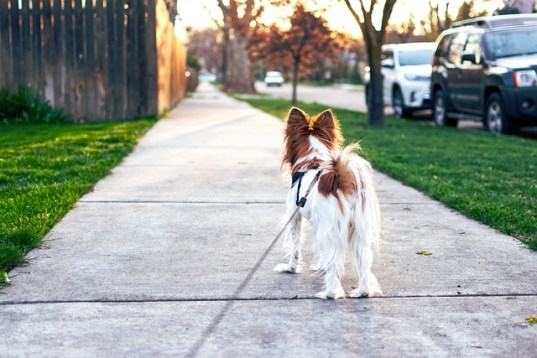 dog walk with rover earn money today fast