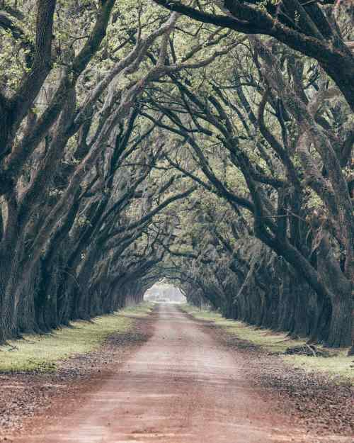 Oak tree lined road at Evergreen Plantation in New Orleans Lousiana