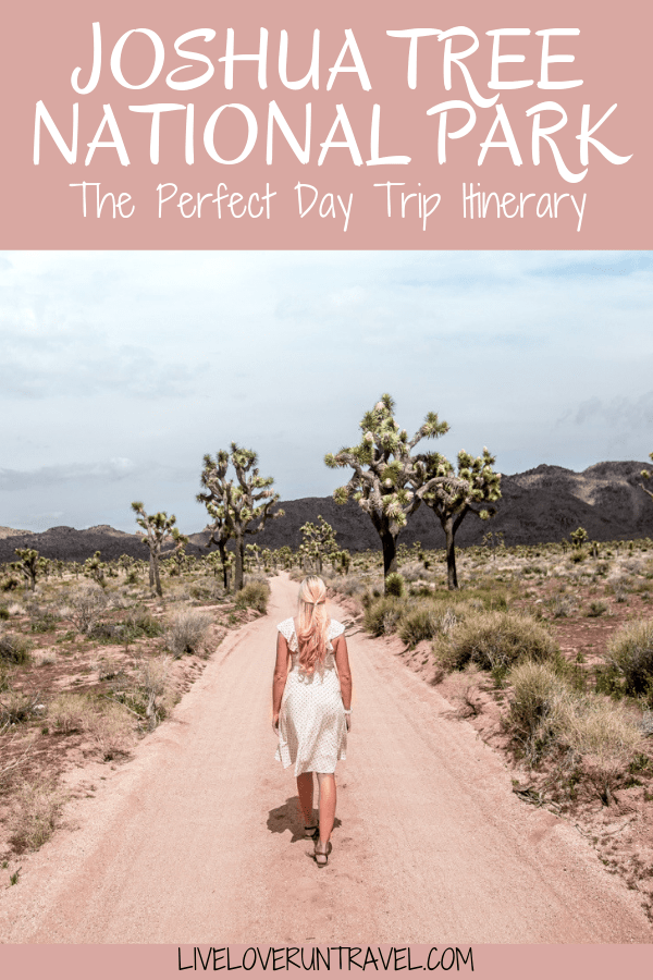 Queen Valley Road in Joshua Tree National Park. Joshua Tree is the perfect stop on a road trip or for a one day stop, so here is a one day itinerary of all the spots you don't want to miss!
