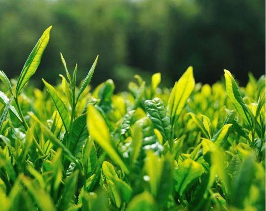 0000049_diatea-green-tea-mix-250gm_760