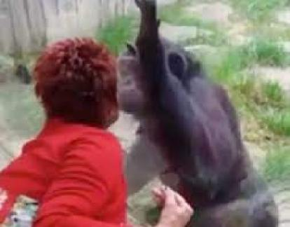 Belgian Woman Banned From Zoo After 4-Year Affair With Chimpanzee