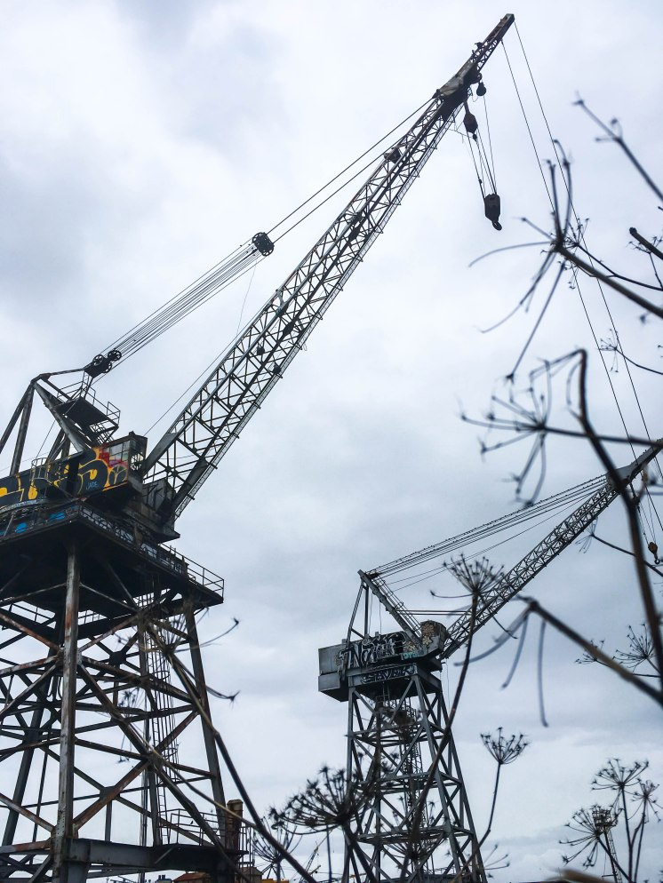 cranes on the site | Dogwatch