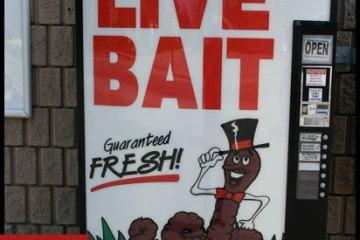 phish live bait vol 01