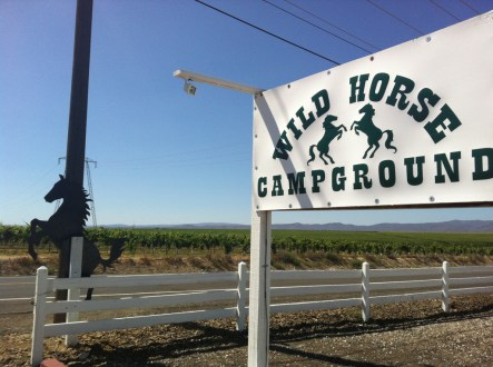 Wild Horse Campground (Phish Gorge 2011)
