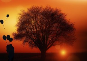 Tree in a Sunset
