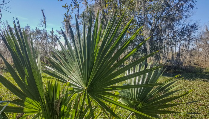 Loved these big palms
