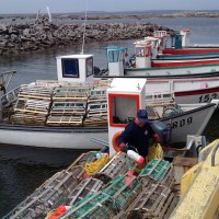 It's Lobster Season on the Great Northern Peninsula