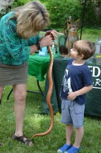Pocket the Corn Snake was popular