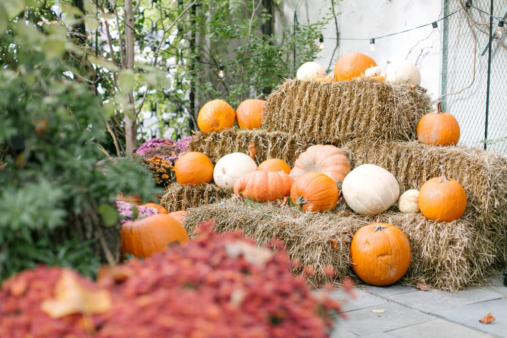 Pumpkin Patch in fall