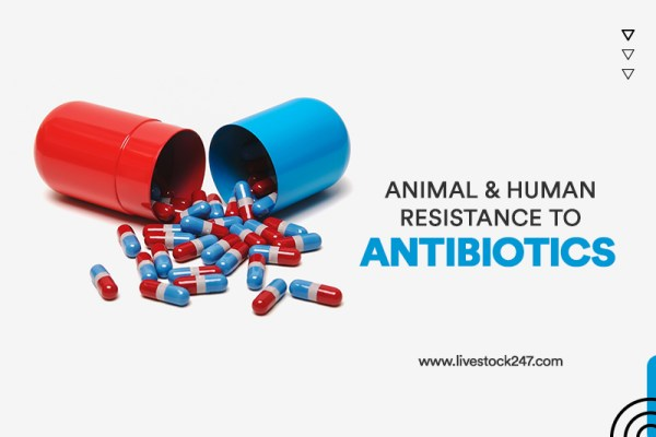 Animal and Human Resistance to Antibiotics
