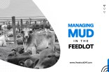 Managing Mud in The Feedlot