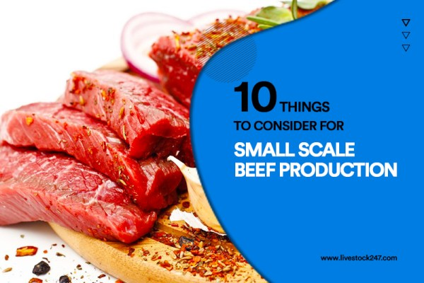 10 Things to Consider for Small Scale Beef Production