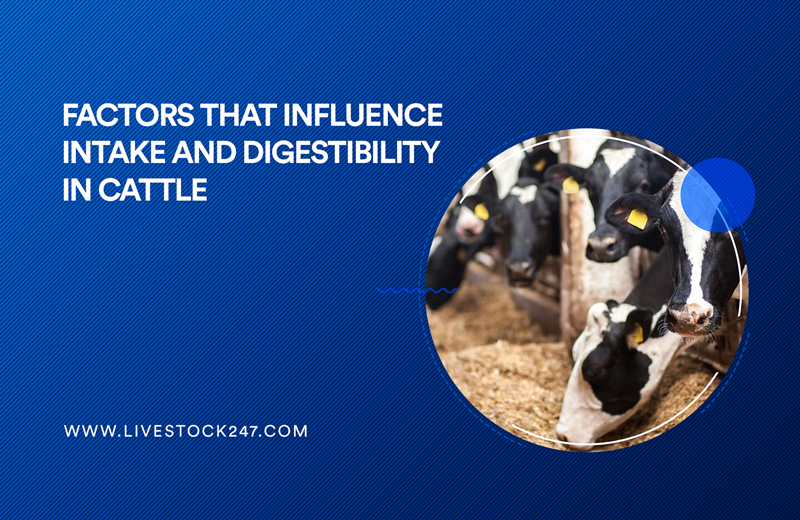 Factors that Influence Intake and Digestibility in Cattle