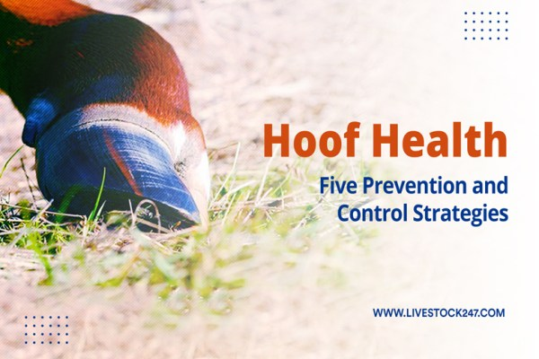Hoof health: 5 Prevention and Control Strategies