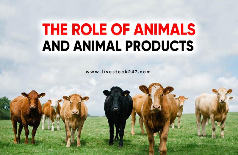 The Role of Animals and Animal Products