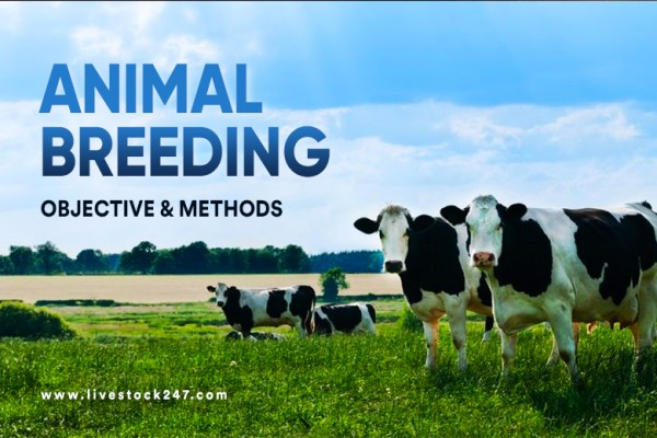 Animal Breeding: Objective and Methods of Animal Breeding