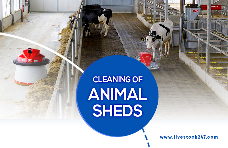 Cleaning of Animal Sheds