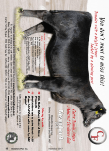 Carter Family Angus Maternal Excellence Sale @ Angus Live