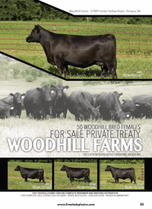 Woodhill Farms Private Treaty Sale @ Woodhill Farms