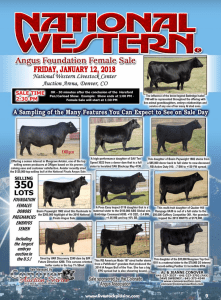 National Western Angus Foundation Female Sale @ National Western Livestock Center Auction Arena | Denver | Colorado | United States