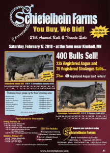 Schiefelbein Farms Annual Bull & Female Sale @ At the farm | Kimball | Minnesota | United States